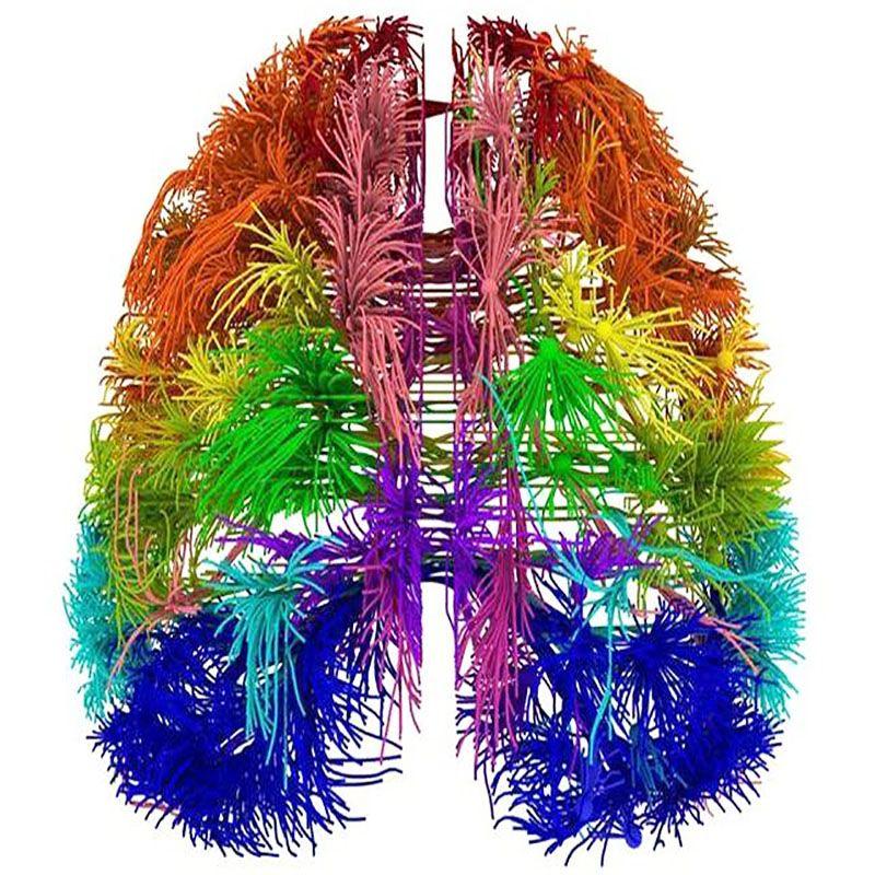 Dos nuevos mapas cerebro