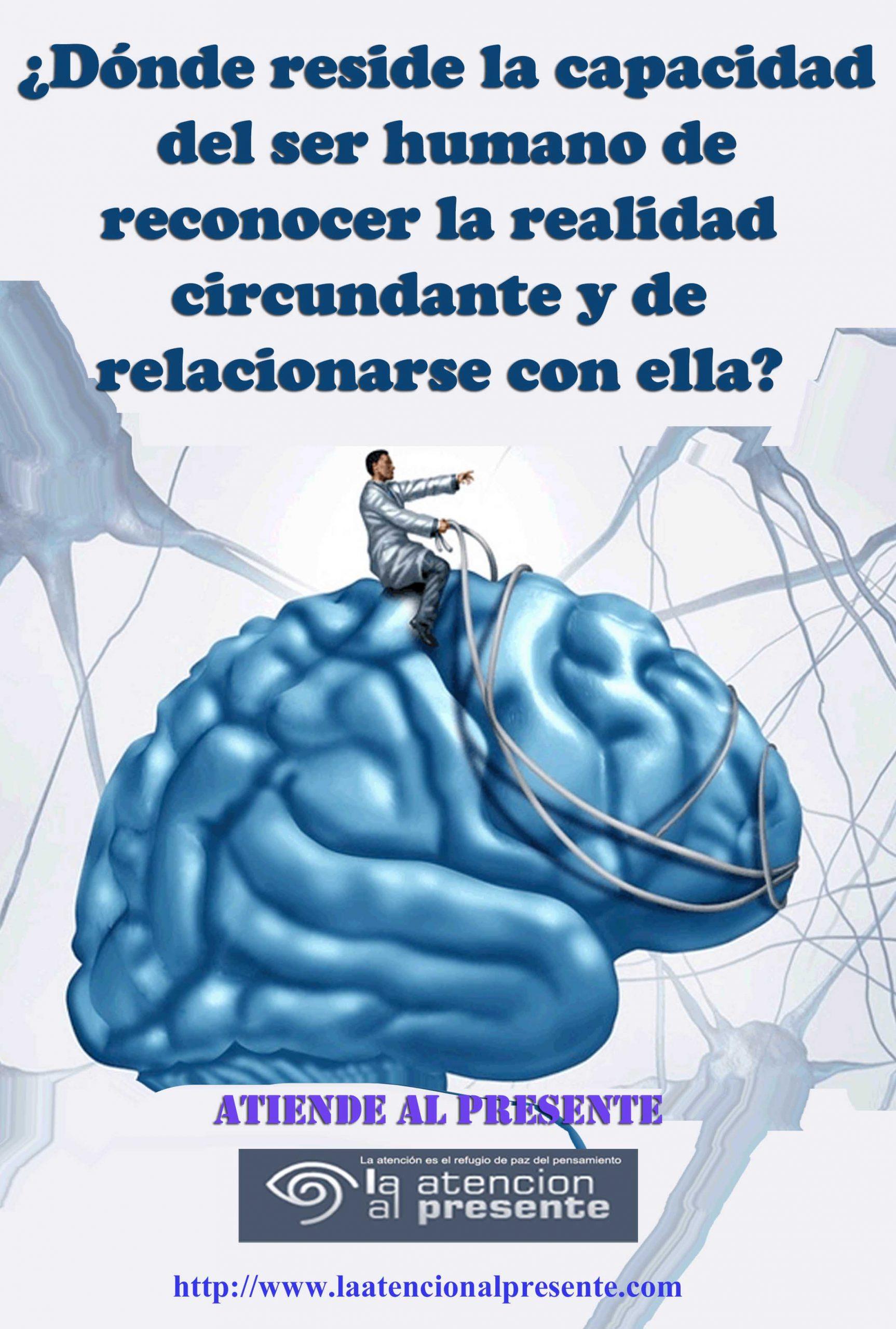 8 de octubre Esteban Donde reside la capacidad del ser humano de reconocer la realidad circundante y de relacionarse con ella min scaled